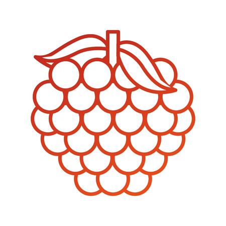 bunch grape fresh fruit vitamin nutrition vector illustration Illusztráció