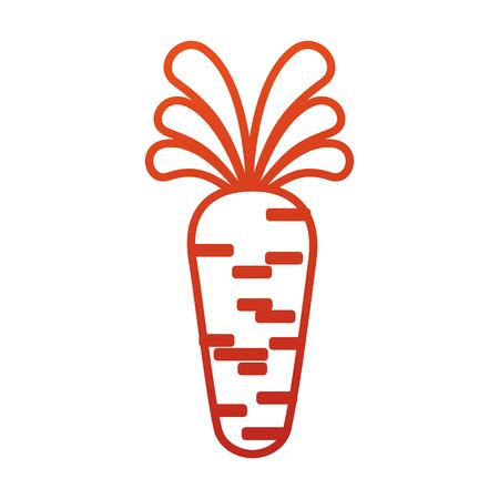 carrot vegetable organic agriculture food vector illustration Ilustracja