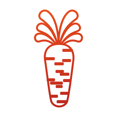 carrot vegetable organic agriculture food vector illustration Illustration