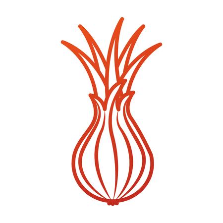 野菜のタマネギ収穫栄養成分ベクトル図  イラスト・ベクター素材