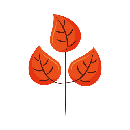 autumn leaves natural botany foliage vector illustration