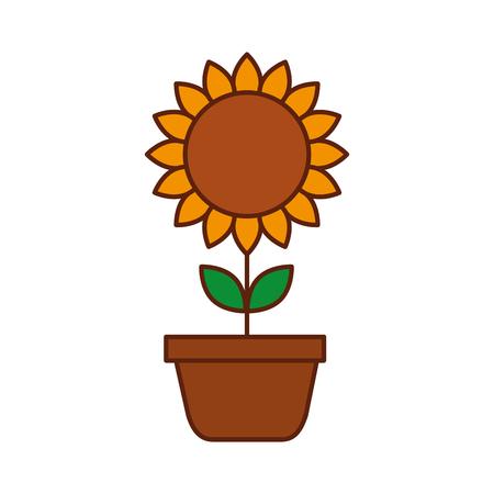 potted sunflower natural plant petal decoration vector illustration