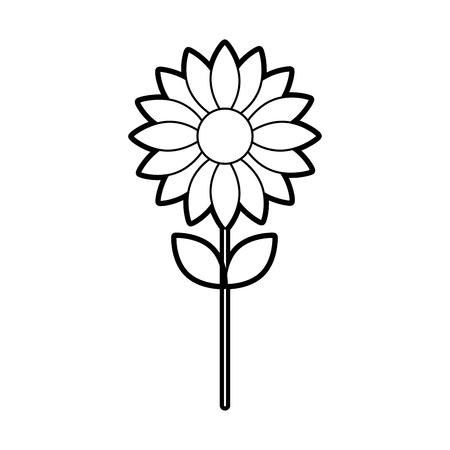 flower petal floral decoration nature vector illustration
