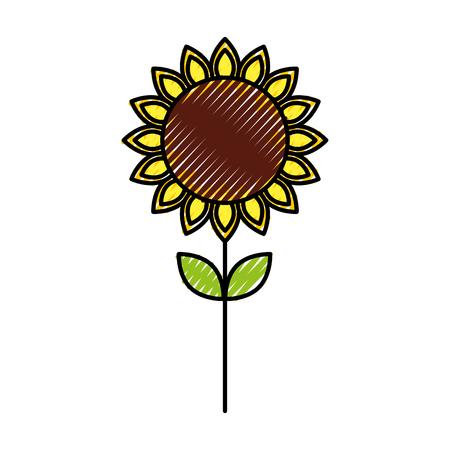 sunflower natural plant petal decoration vector illustration Illustration