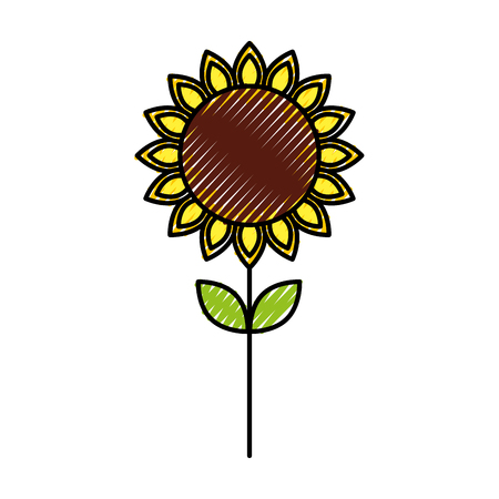 sunflower natural plant petal decoration vector illustration Ilustrace