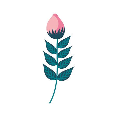 Een van het de bloemendecoratie van de asterbloem natuurlijke het beeld vectorillustratie
