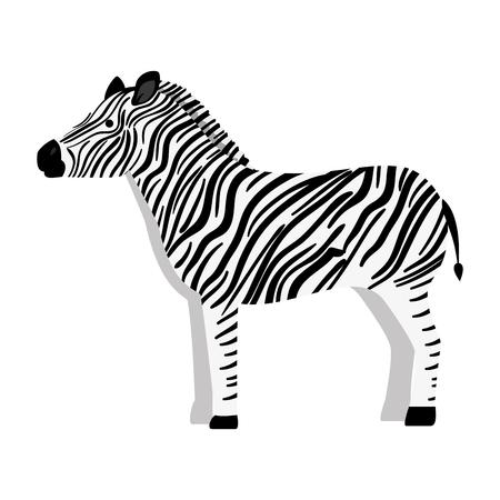 Ein wilder Zebra lokalisierte Ikonenvektor-Illustrationsdesign Standard-Bild - 88617483