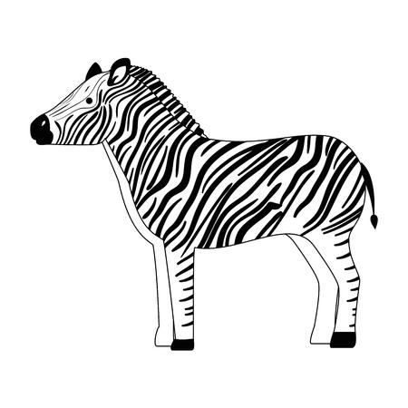 Ein wilder Zebra isoliert Symbol Vektor-Illustration , Design , Standard-Bild - 88617750