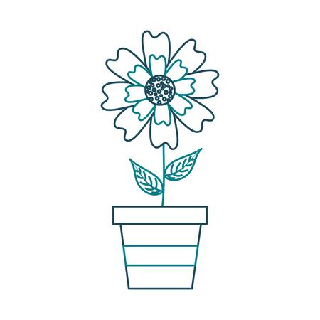 A potted aster flower natural petal decoration image vector illustration Illustration