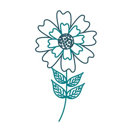 An aster flower natural petal leaves stem vector illustration