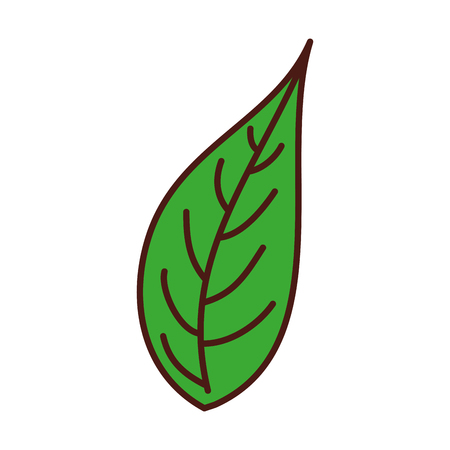 green leaf natural foliage botanical vegetation icon vector illustration Ilustração