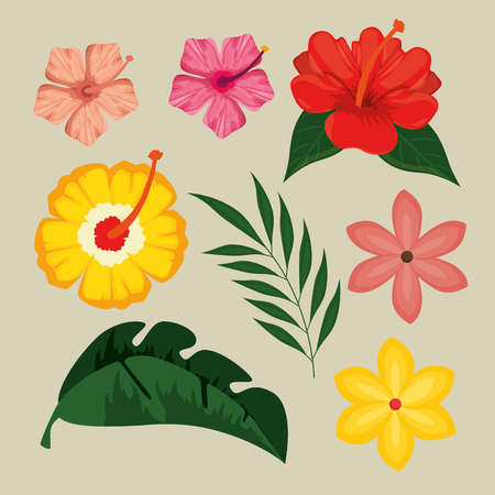 summer tropical graphic elements vector illustration graphic design