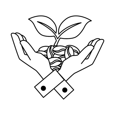Hands with coffee seeds and leafs plant vector illustration, graphic design. Illustration