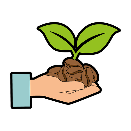 hands with coffee seeds and leafs plant vector illustration design