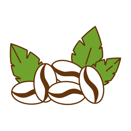 coffee seeds with leafs vector illustration design Illustration