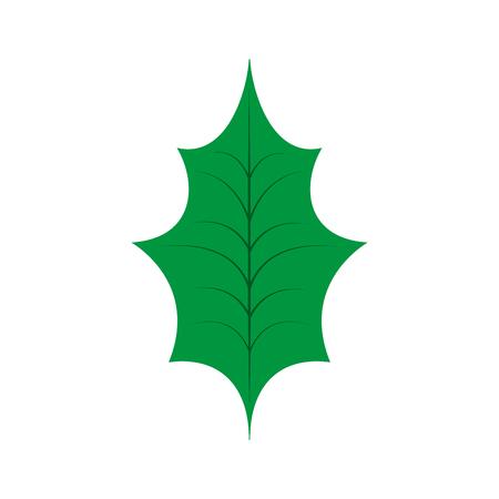 Christmas leaf holly natural decoration vector illustration