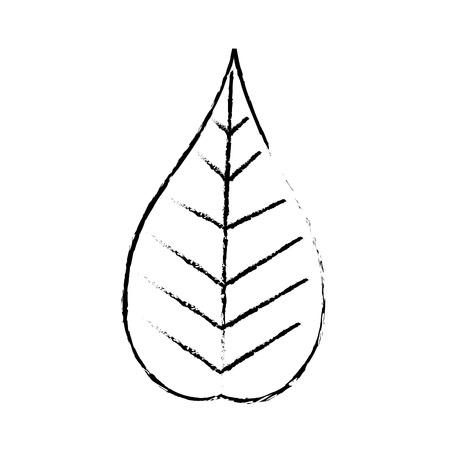 クリスマスデコレーション葉の自然ベクターイラスト  イラスト・ベクター素材