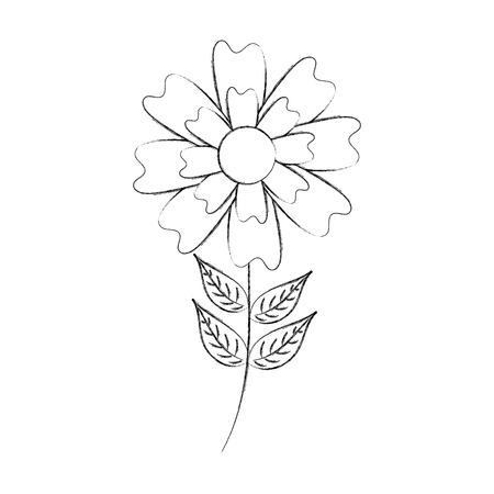 aster flower natural petal leaves stem vector illustration