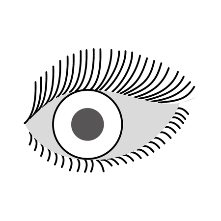 beautiful female eye wide open with eyebrow and eyelash vector illustration