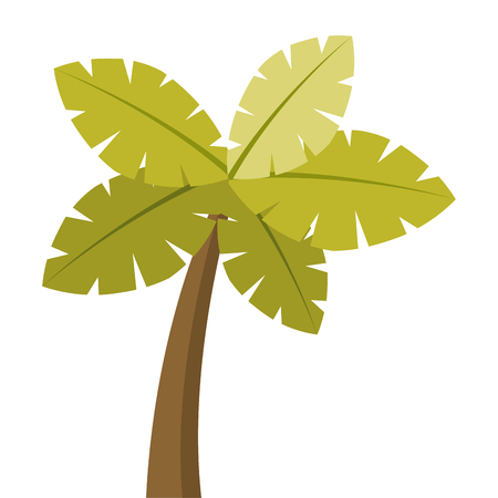 tropical palm tree exotic plant trunk nature vector illustration Ilustrace