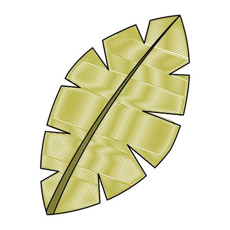 leaf palm tree foliage natural image vector illustration drawing
