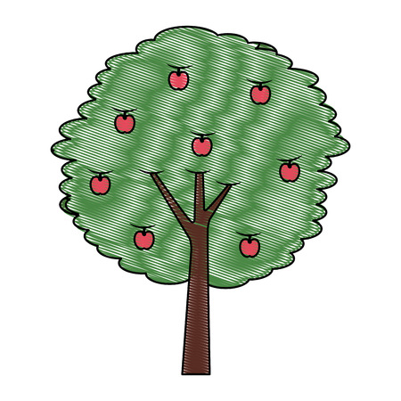 fruit apple tree agriculture nature botanical vector illustration drawing Illustration