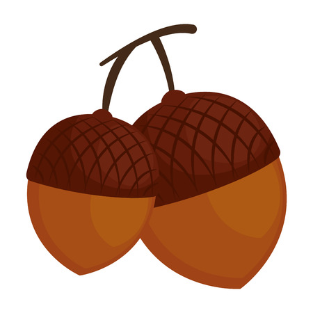 nuts fruits isolated icon vector illustration design