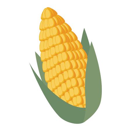 corn fresh isolated icon vector illustration design Çizim