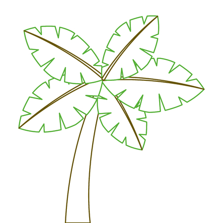 tropical palm tree exotic plant trunk nature vector illustration green line