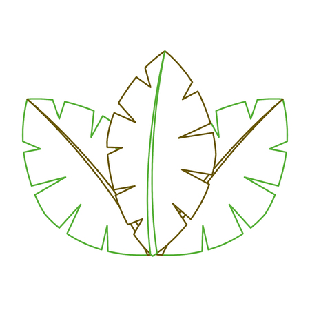 tropical leaves of palm tree flora image vector illustration green line
