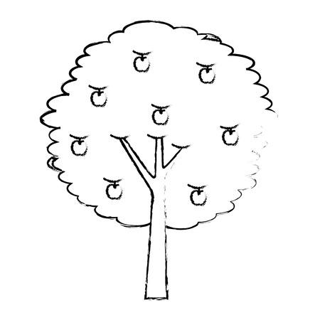fruit apple tree agriculture nature botanical vector illustration Illustration