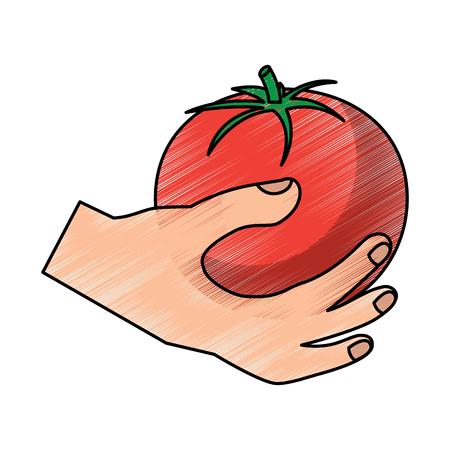 hand holding tomato vegetable food health vector illustration