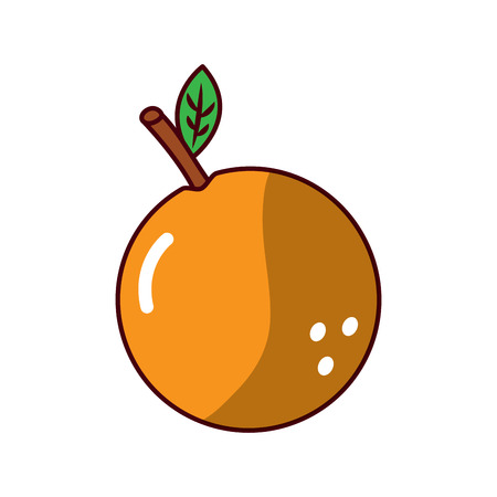 Orange fruit fresh raw delicious, vector illustration. Иллюстрация