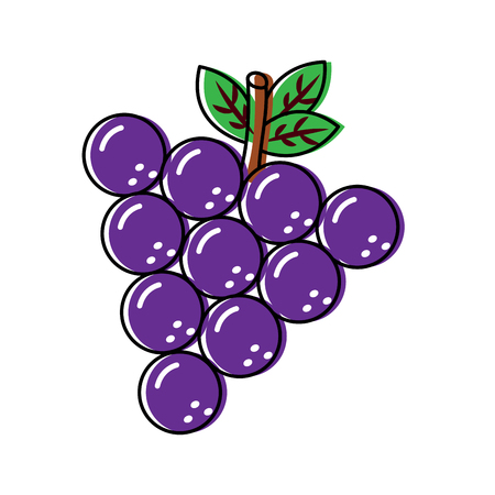 Illustrazione di vettore dell'alimento di nutrizione delle vitamine deliziose della frutta dell'uva Archivio Fotografico - 90945367