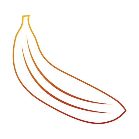 Banana fruit delicious vitamins nutrition food vector illustration