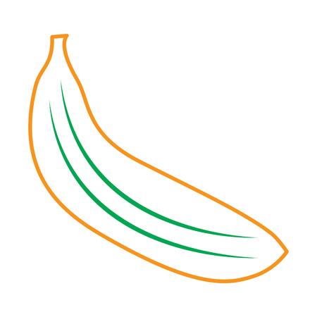 banana fruit delicious vitamins nutrition food vector illustration line green orange