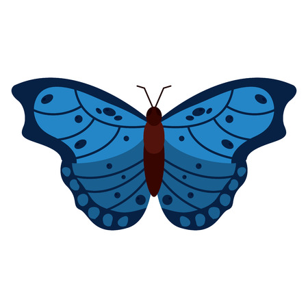Butterfly insect bug icon image vector illustration design
