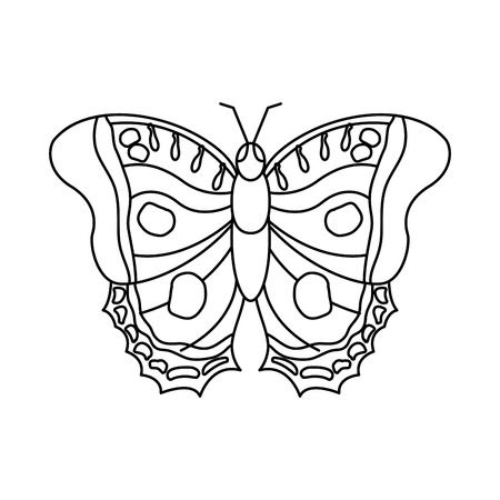 butterfly insect bug icon image vector illustration design  black line black line Illustration