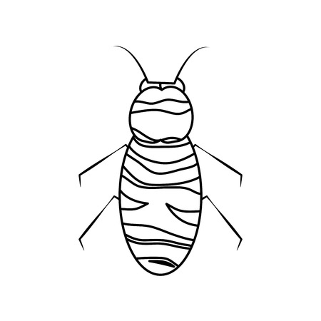 insect bug icon image vector illustration design  black line black line Illustration