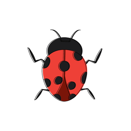 ladybug insect bug icon image vector illustration design