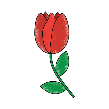 Tulip flower vector illustration in sketch style