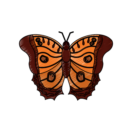 Butterfly insect icon image, vector illustration.