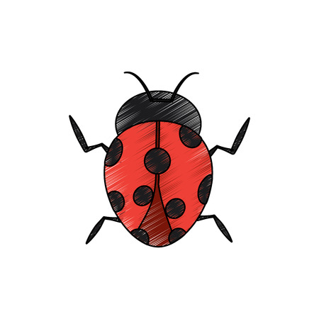 Ladybug insect bug icon , vector illustration.