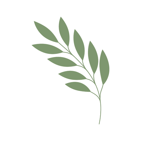 olive branch isolated icon vector illustration design