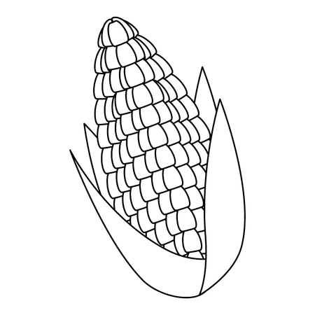 corn fresh isolated icon vector illustration design Çizim