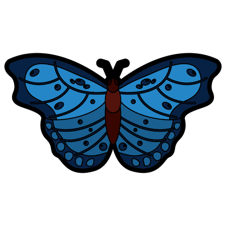 top view of beautiful butterfly insect animal vector illustration