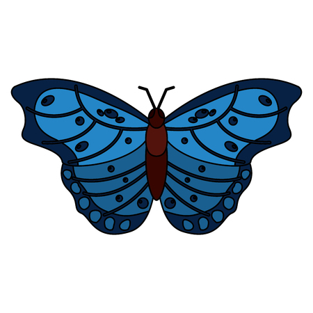 A top view of beautiful butterfly insect animal vector illustration