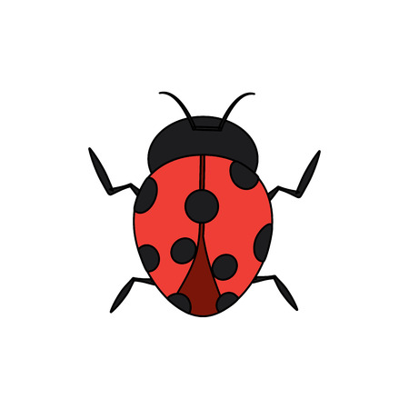 A ladybug arthropod insect single icon vector illustration