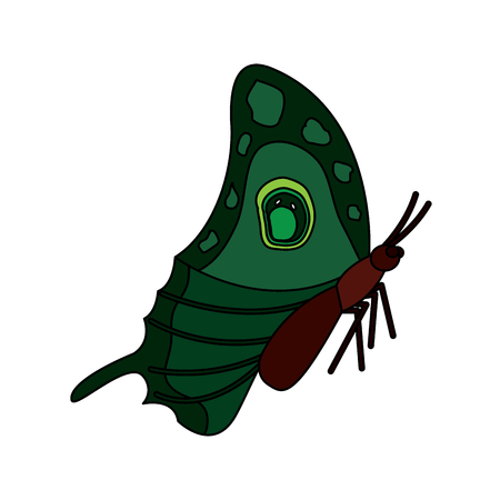 Side top view of beautiful monarch butterfly. Illustration