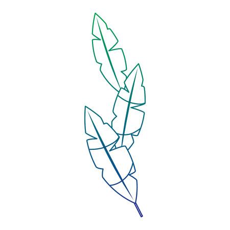 feathers decoration ornament element icon vector illustration